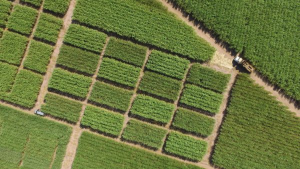 Sensoriamento remoto ajuda a obter informações sobre o plantio