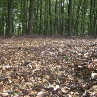 Serrapilheira é camada superficial de áreas vegetadas