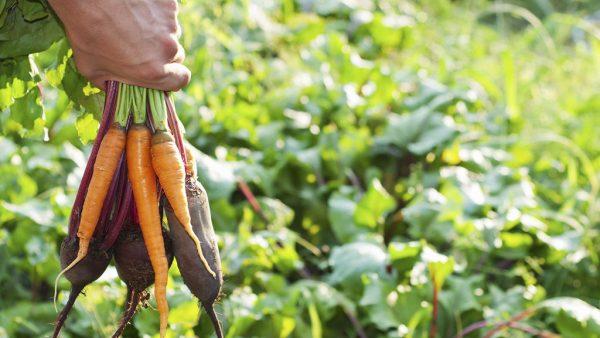 Produtos orgânicos ganham cada vez mais popularidade