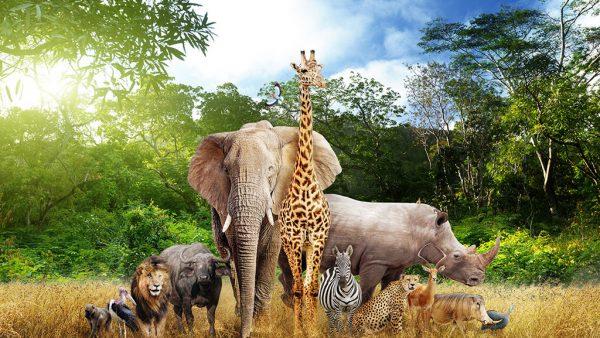 Savana é região com gramíneas, árvores esparsas e arbustos isolados