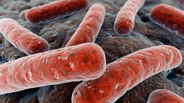 Brucelose é uma infecção transmitida de animais para seres humanos