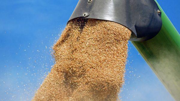 Trading Gavilon é uma das líderes na gestão de commodities agrícolas