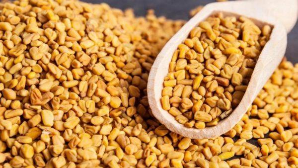 Feno grego é uma espécie vegetal muito utilizada na medicina alternativa