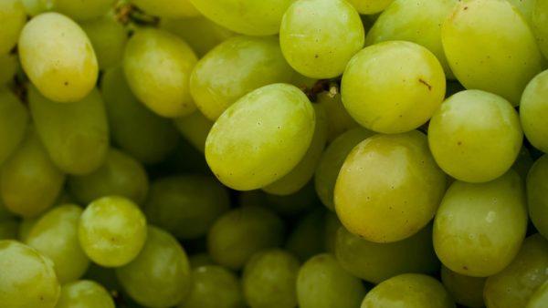 Uva sem caroço é produzida em várias regiões brasileiras