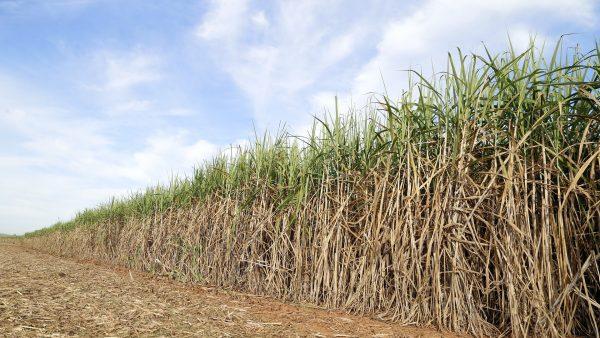 BrasilAgro atua com aquisição e venda de propriedade rurais