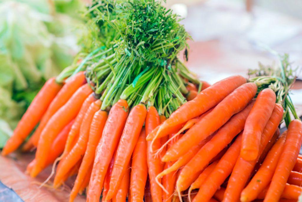 como plantar cenoura