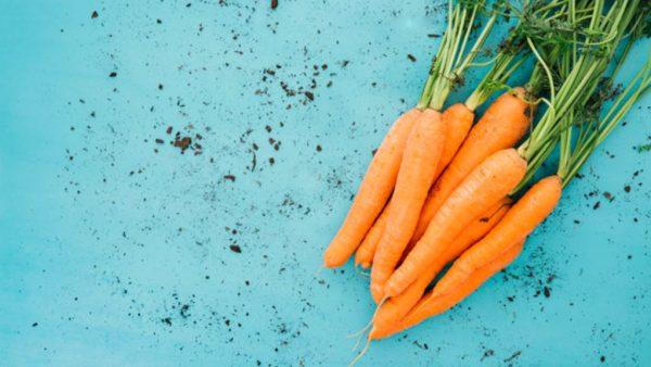 Saiba como plantar cenoura para obter excelentes resultados