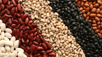 Tipos de feijão são variados e importantes para a economia