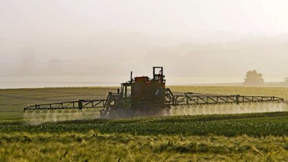 Dicamba é um herbicida contra ervas daninhas