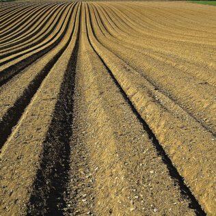 Edafologia é a ciência que estuda a utilização e influência do solo