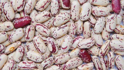 Feijão rajado é parecido com o carioca, mas possui grãos maiores
