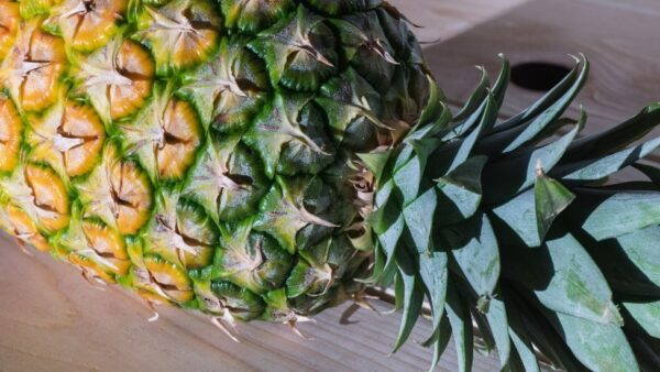 Como plantar abacaxi e obter excelentes frutas para comercialização