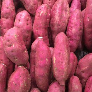 Aprenda como plantar batata doce e as melhores práticas deste cultivo