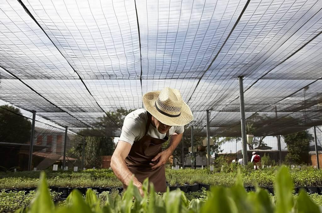 Agricultura natural