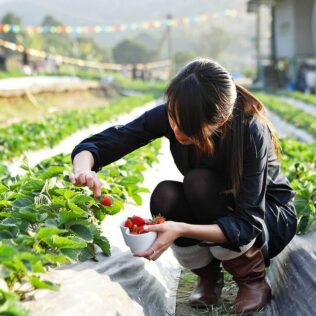 Agricultura natural é abordagem popularizada pelo japonês Mokiti Okada