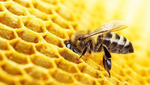 Apiário é o conjunto de colmeias utilizadas para criar abelhas