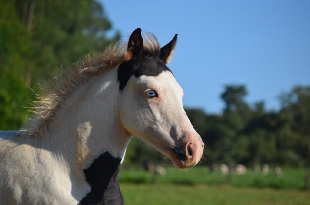 cavalos à venda