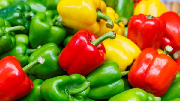 Aprenda como plantar pimentão passo a passo e sem complicações