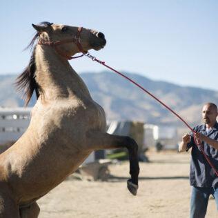 Doma é um processo longo e metódico para amansar um animal