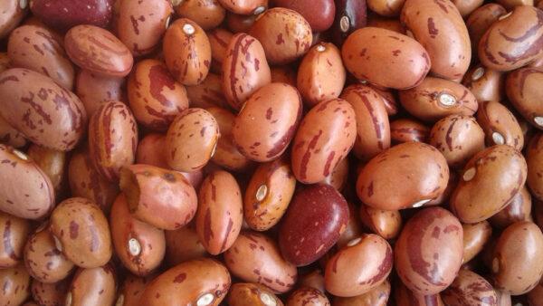 Feijão rosinha tem cozimento rápido e absorve bem os temperos