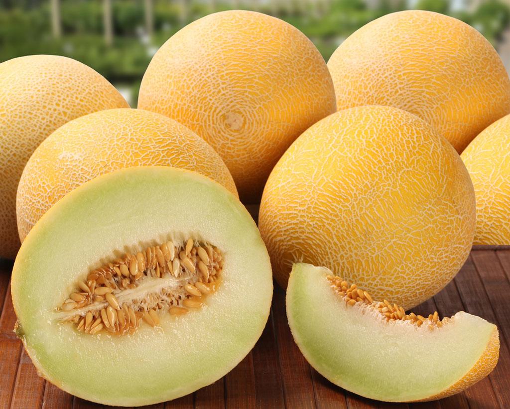 como plantar melão