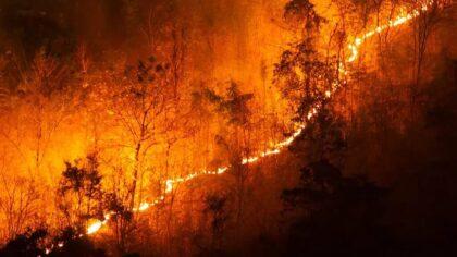 Incêndio florestal se propaga sem controle e causa grande destruição