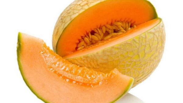 Melão orange é fruta sensível e um excelente laxante natural