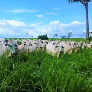 Pastagem é nome da vegetação que serve como alimento para o gado