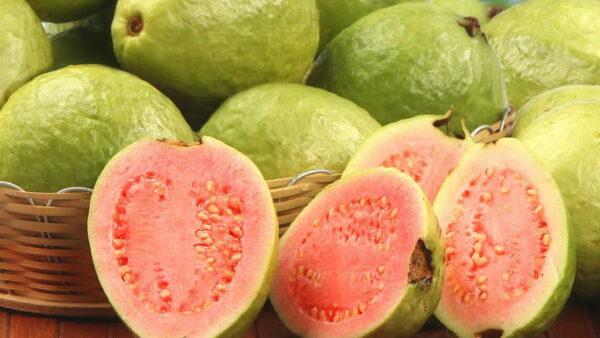 Saiba como plantar goiaba e ter boas frutas durante todo o plantio