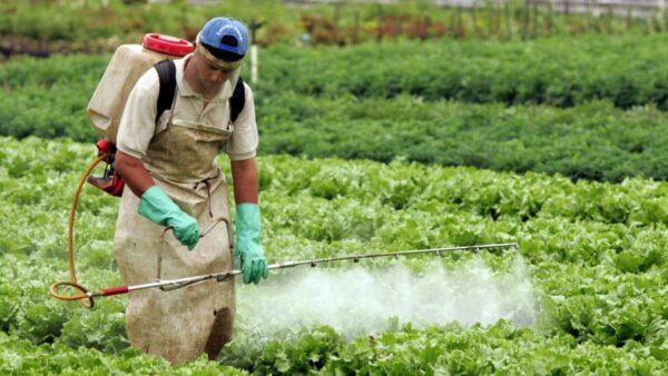 Organoclorados são compostos geralmente encontrados nos agrotóxicos