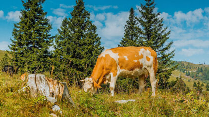 Pasto é a vegetação que serve como alimento para o gado