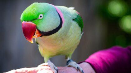 Há vários tipos de periquito, sendo a maioria nativa do Brasil