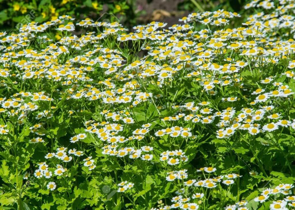 O que são herbáceas?